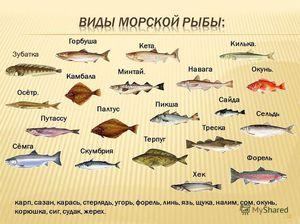 Горбуша - хищная рыба.
