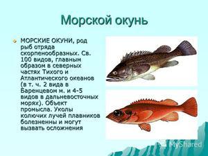 приготовление морской рыбы