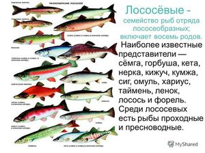 рыбы лососевые названия