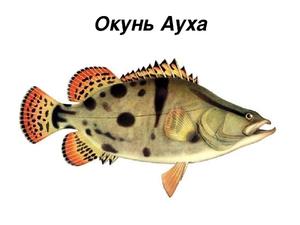 Рыба ауха как приготовить