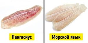 Чем отличается морской язык от пангасиуса